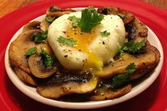 Poached Egg on Sauteed Mushrooms royalty free stock photo