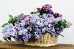 Perfect purple lilac flowers bunch in a basket on wooden table. Purple lilac flowers bunch in a basket on wooden table on white background royalty free stock images