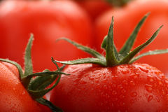 Perfect red wet tomatoes with tomatoes Royalty Free Stock Photo