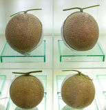 Perfect ripe melons at the fine shop. Royalty Free Stock Image