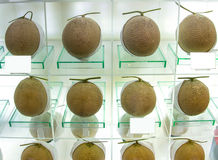 Perfect ripe melons at the fine shop. Royalty Free Stock Images