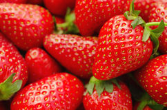 Perfect ripe Strawberries close up Stock Image