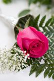 Perfect Rose Stock Photo