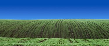 Perfect rows. Of vegetable crops growing Stock Image