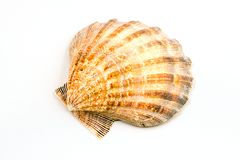 Perfect seashell Stock Photography