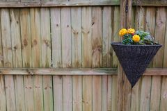 Beautiful Flowers in a hanging pot with a great fence background royalty free stock images