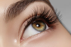 Perfect shape of eyebrows, brown eyeshadows and long eyelashes. Closeup macro shot of fashion smoky eyes visage. Beautiful macro shot of female eye with classic Royalty Free Stock Images
