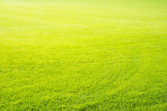 Perfect short cut green grass background Stock Image