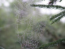 Perfect Spider Web with Water Drops. Water drops in a gossamer spider web Royalty Free Stock Photo