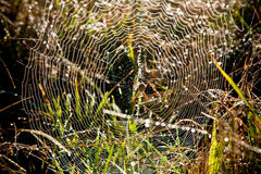 Perfect Spiders Web. Spider awaiting its prey on a web Stock Image
