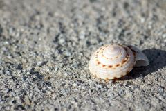 Perfect spiral sea shell in the sand. Lone shell in the sand along the Sea of Cortez, Sonora Mexico.  This delicate, ornate shell is a perfect spiral of beiges Royalty Free Stock Image