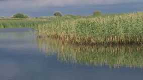 Perfect spot on a fishing rod pond. 55 stock footage