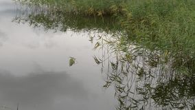 Perfect spot on a fishing rod pond. Perfect spot on a fishing rod pond stock video footage