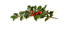 Free Perfect Sprig Of Holly Stock Image - 16181481