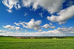 Perfect spring day. Corn field in may, blue sky white fluffy cumulus royalty free stock photography