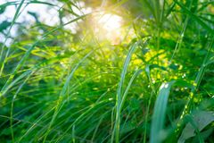 Perfect spring sunny day royalty free stock image
