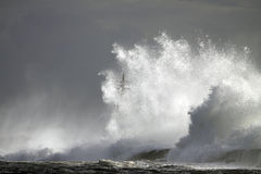 Perfect storm, the wave Stock Photography