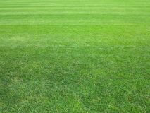 Perfect lawn green grass background. Perfect striped lawn green fresh grass background Stock Images