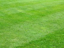 Perfect lawn green grass background. Perfect striped lawn green fresh grass background Royalty Free Stock Photography