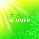 Perfect summer. Banner with typographic design. Background with leaves and sun Royalty Free Stock Photos