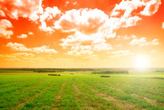 Perfect summer day Royalty Free Stock Images