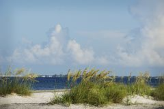 A perfect summer day on the beach with blue skies and white clouds in Ft.Myers Beach, Florida. A summer day on the beach with green grasses overlooking the stock photo