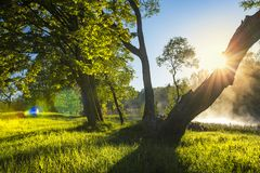 Perfect summer landscape on green nature with sun backlight through tree trunk on clear warm day. Green trees on river bank with fog over surface of water stock image