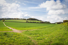 Perfect sunny summer landscape Stock Photos