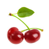 Perfect sweet cherries with the leaf isolated on a white background Royalty Free Stock Photography