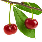 Perfect sweet cherries with the leaf isolated on a white background Stock Images