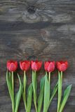 perfect Tidy tulips on a old wood background Stock Photos