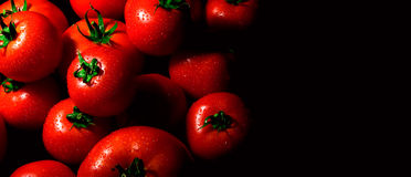 Perfect tomatoes with drops of water Royalty Free Stock Image