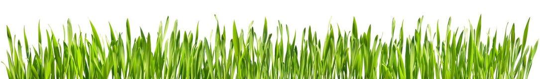 Perfect trawa odizolowywająca zdjęcie stock