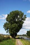 Perfect tree stock image
