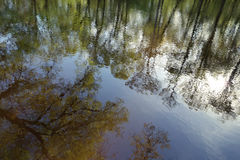 Perfect tree reflection Royalty Free Stock Photography