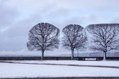 Perfect trees in spring, perfectionism, symmetry royalty free stock images