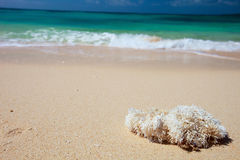 Perfect tropical beach Stock Images