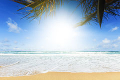 Perfect tropical beach Royalty Free Stock Photo
