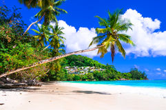 Perfect tropical beach scenery - palm tree over turquoise sea Royalty Free Stock Photography