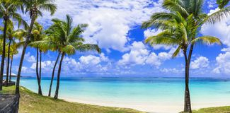 Perfect tropical beach scenery with palms and turquoise sea. Mau royalty free stock photo