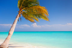 Perfect tropical beach Royalty Free Stock Image