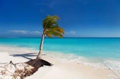 Perfect tropical beach Stock Photos