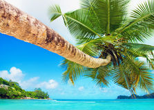 Perfect tropical coconut palm beach Baie Lazare, Mahe island, Se Royalty Free Stock Images
