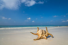 Perfect tropical island paradise beach Maldives Stock Photography