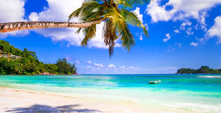 Perfect tropical scenery, palm tree over turquoise sea Royalty Free Stock Photos