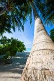 Perfect tropikalna plaża z palmą Fotografia Royalty Free