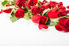 Perfect Valentines roses Royalty Free Stock Image