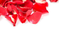 Perfect Valentines roses Royalty Free Stock Photo