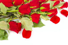 Perfect Valentines roses Royalty Free Stock Images