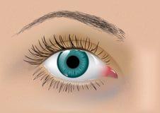 Perfect vector eye Stock Photography